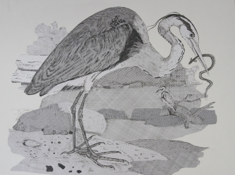 Heron after Bewick (envelopes and ink)
